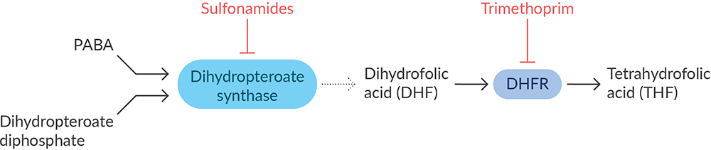 Essential Metabolite Synthesis