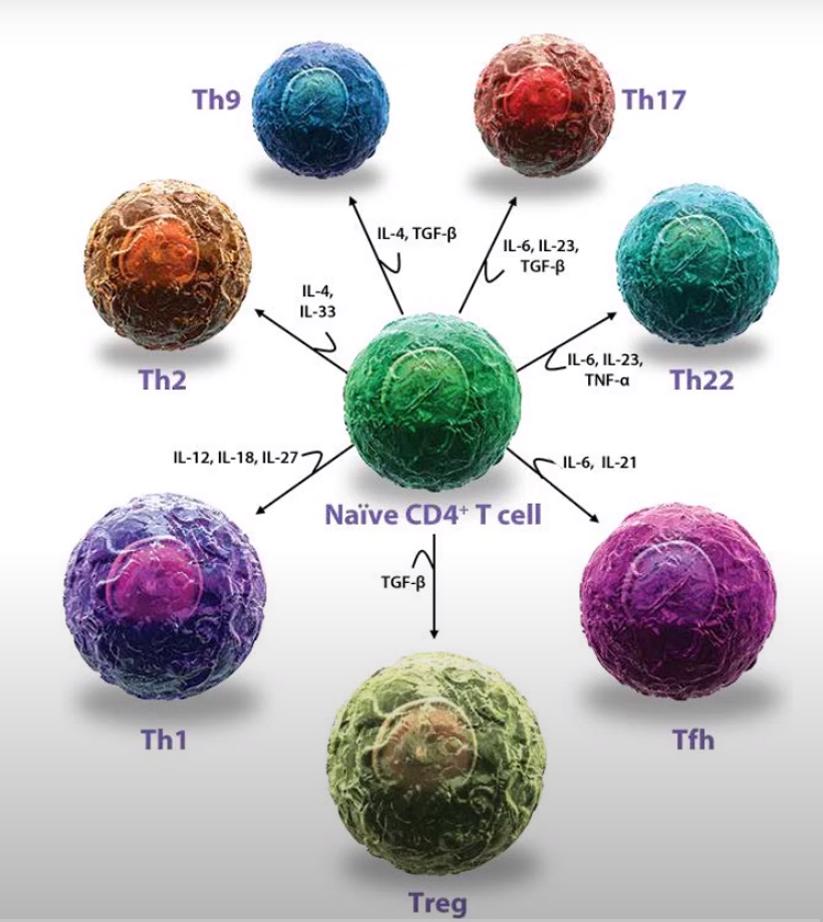 Cytokine intracellular signaling