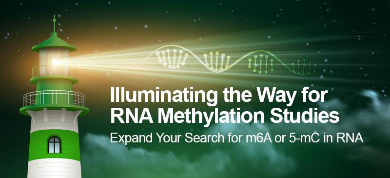 RNA Methylation Studies